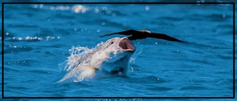 Uccello anticipa pesce. Non anticipare ma inseguire è un errore tipico del trading